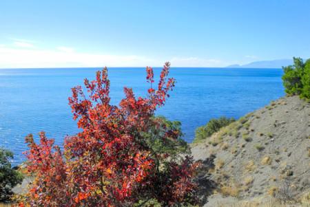 Алые листья скумпии на берегу с. Морское. Фото: Алла Лавриненко/Великая Эпоха