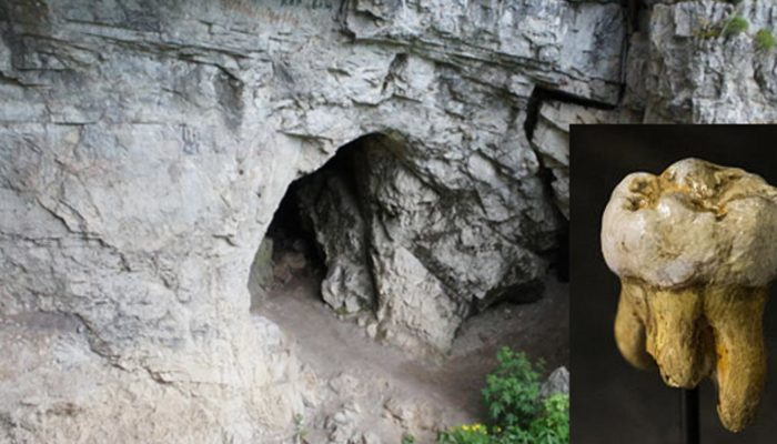 О существовании неизвестного вида гомо сапиенс свидетельствует ДНК древнего денисовца