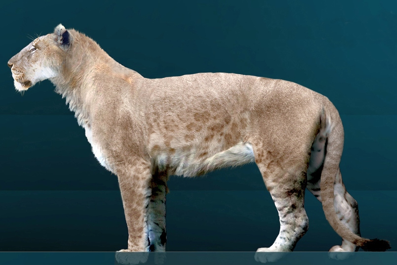 Вымерший вид льва, живший на американском континенте. Фото: A. C. Tatarinov/wikipedia.org/CC BY-SA 3.0