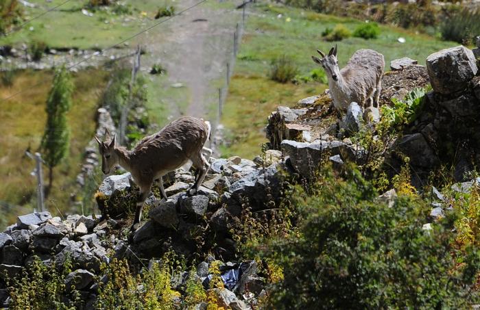 Тибет, экология, ледники, изменение климата