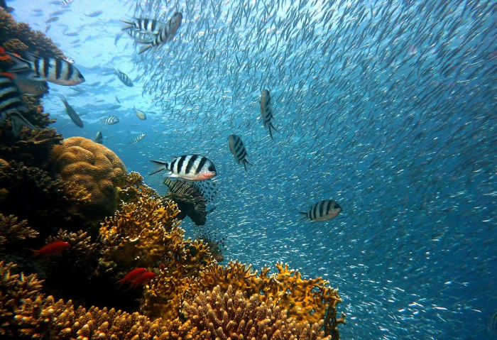 Биологи объяснили невидимость рыб в океане