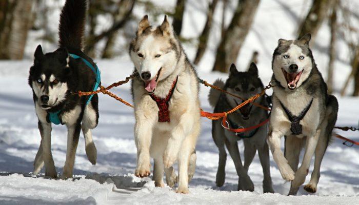 Породистых собак разводили ещё восемь тысяч лет назад