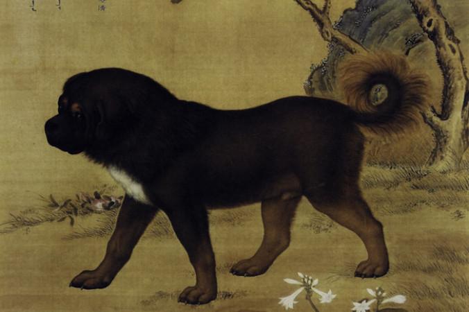 Тибетский мастиф. Картина династии Цин. Источник фото: Public Domain