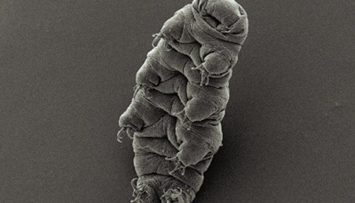 Самое выносливое животное в мире имеет чужеродную ДНК