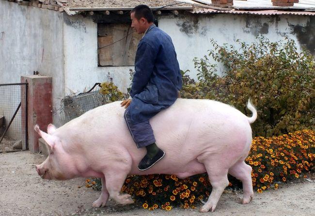 2 ноября 2015 года. В окрестностях города Чжанцзякоу провинции Хэбэй. Фото: epochtimes.com