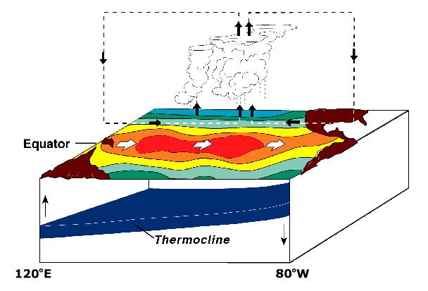 Условия образования Эль-Ниньо: массив тёплой воды движется к южноамериканскому побережью. Отсутствие поднимающихся с глубины холодных вод усиливает потепление. Фото: Wikier/wikipedia.org/ public domain