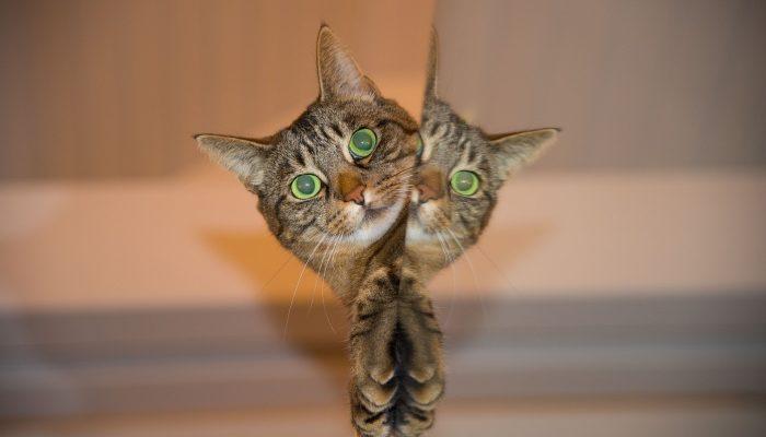 Девять жизней кошки — миф или реальность?