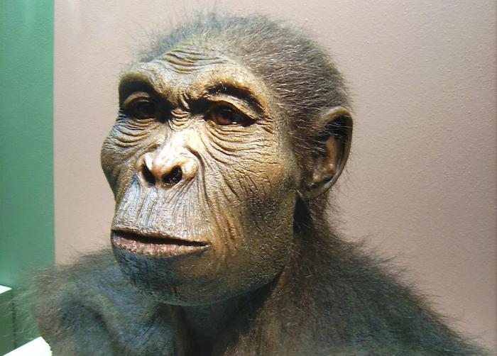 Человек умелый. Фото: Lillyundfreya/wikipedia.org/CC BY-SA 3.0