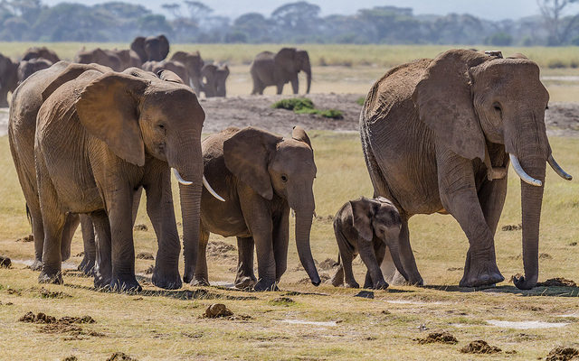 В Таиланде слоны нападают на автомобили туристов