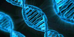 Страшный сон креациониста: учёные приступили к редакции генов человеческих эмбрионов