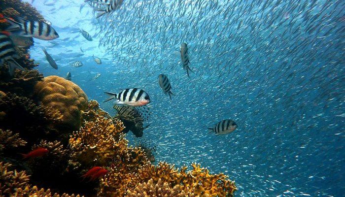 Австралийские сёрферы изобрели мусоросборник для океана (видео)