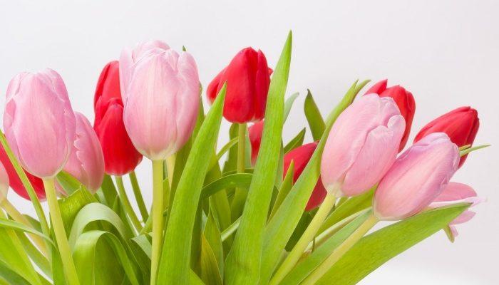 «Экспромус» поздравляет своих покупателей с 23 Февраля