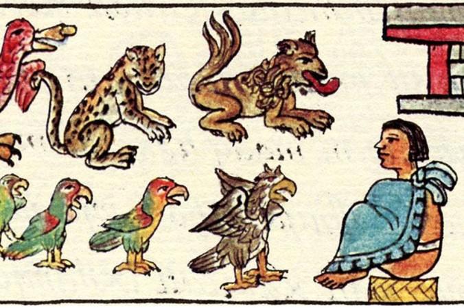 «Животные правителя». Иллюстрация из «Флорентийского кодекса», книги VIII в. Фото: Mexico Lore
