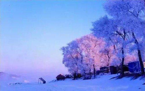 Деревья, покрытые инеем, в провинции Цзилинь. Фото: Secret China