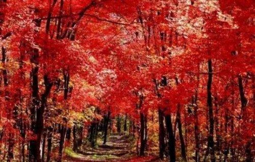 Древняя дорога, вдоль которой растут красные клёны, дарит великолепные пейзажи осенью. Фото: Secret China