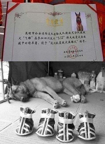 Герой по кличке Фейсюн. Фото: Kanzhongguo