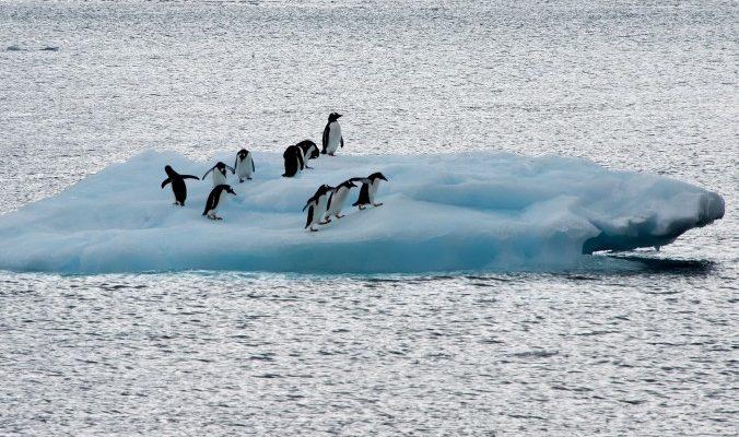 В Антарктиде нашли останки двухметрового ископаемого пингвина
