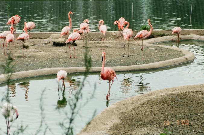 праздники, зоопарки, день рождения, Московский зоопарк, Москва