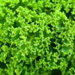 капуста, зелень, салат, витамин К