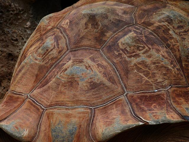 древние люди ели мясо черепах ещё 400 тысяч лет назад