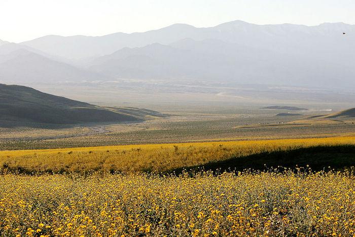 Пустыни цветут в период дождей