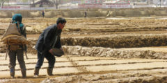 Грозит ли КНДР очередной голод?