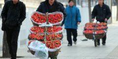 В китайскую клубнику вводят инъекции