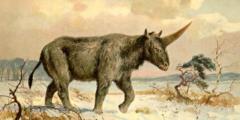 Единороги в древней Сибири: найдены останки