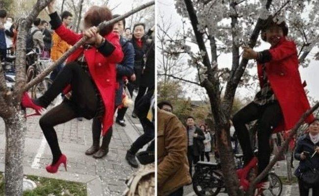 Китайская бабушка залезла на дерево в общественном парке для лучшей композиции фото (видео)