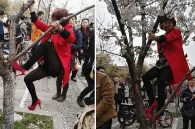 Женщина в возрасте залезла на дерево, чтобы лучше выглядеть на фото. Город Нанкин провинции Цзянсу. Март 2015 года. Фото: epochtimes.com