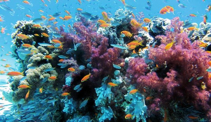 Большой Барьерный риф погибает (видео)