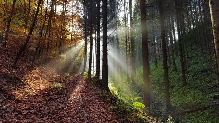 Деревья — древние помощники человека