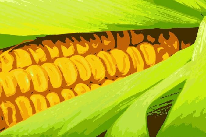 гмо, гены, кукуруза
