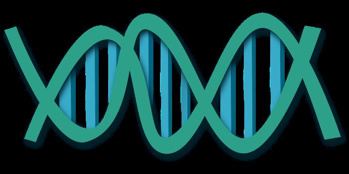 ДНК, гены