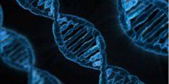 Активность генов меняется в зависимости от сезона