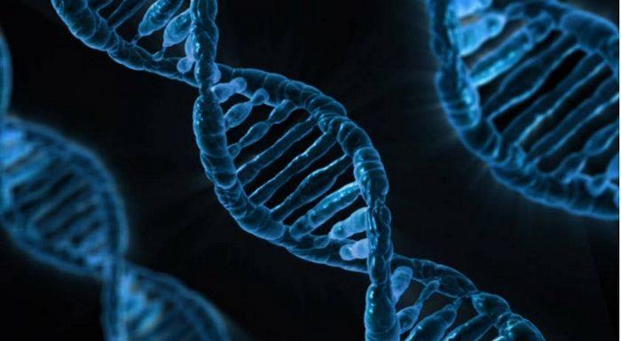Древний ретровирус обнаружен в ДНК человека