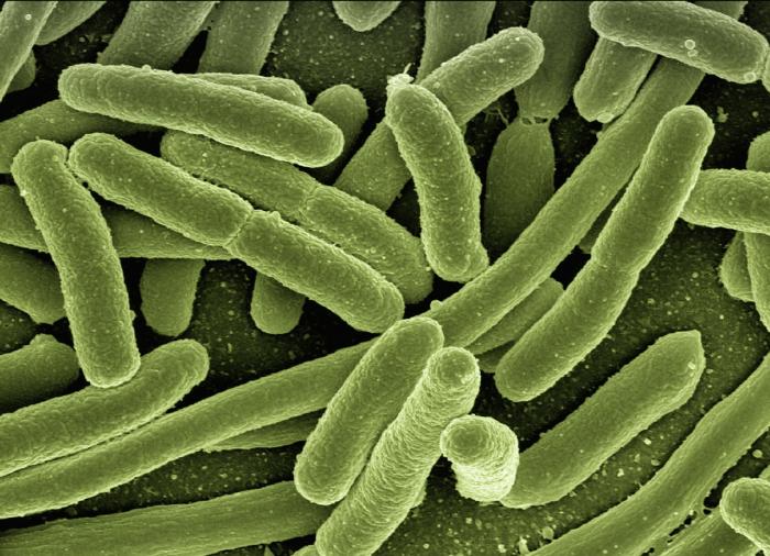 Устойчивые бактерии могут вернуть медицину в средневековье