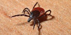 Клещевой энцефалит в крови выявит биосенсор