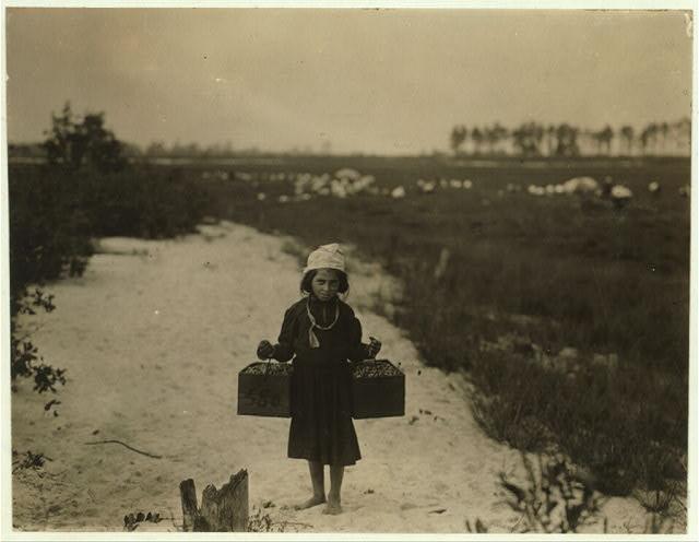 Роза, 10 лет, собирает клюкву. Работает только в школьные каникулы. Брауна Миллс, Нью-Джерси, 28 сентября 1910 г. Фото: L.W. Hine/LOC