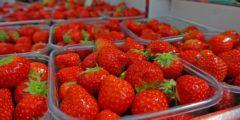 5 вкусных продуктов, защищающих от солнечных лучей