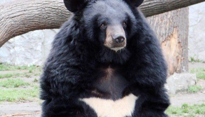 Китаец подобрал на улице щенка, который оказался медвежонком