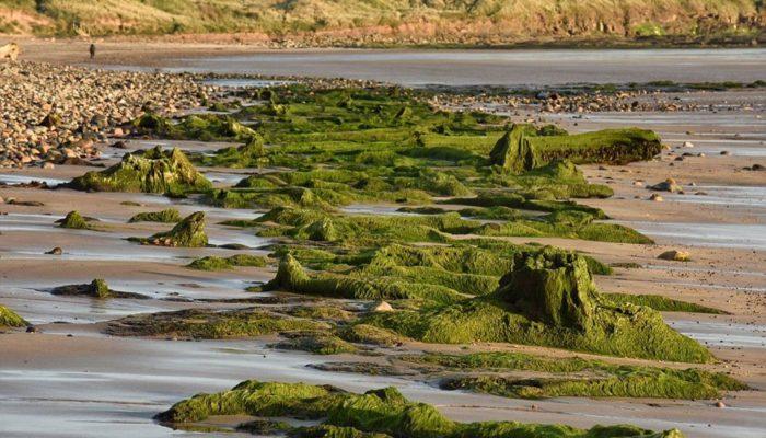 Атлантида каменного века: 7000-летний лес, следы древних людей и животных нашли в Великобритании