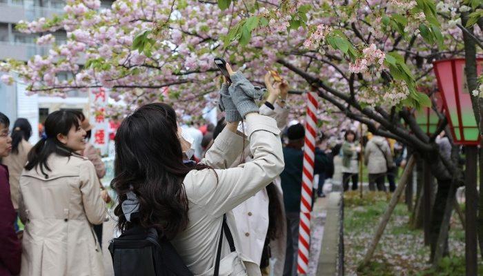 Туры в Японию: актуальные маршруты