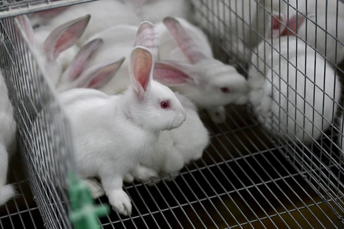 Фермерское хозяйство по разведению кроликов. Фото: DAMIEN MEYER/AFP/Getty Images