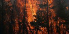 В Челябинской области лесной пожар перекинулся на жилые дома. Людей эвакуируют