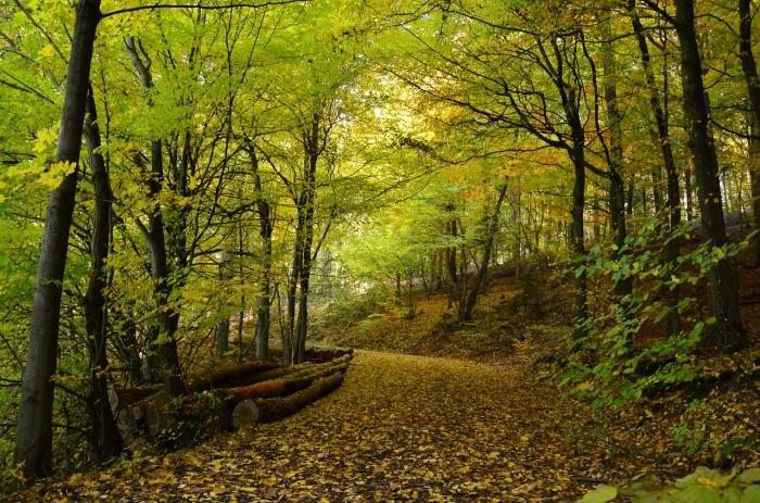 Лес занимает около 45 процентов территории России. Фото: condesign/pixabay.com/CC0 Public Domain