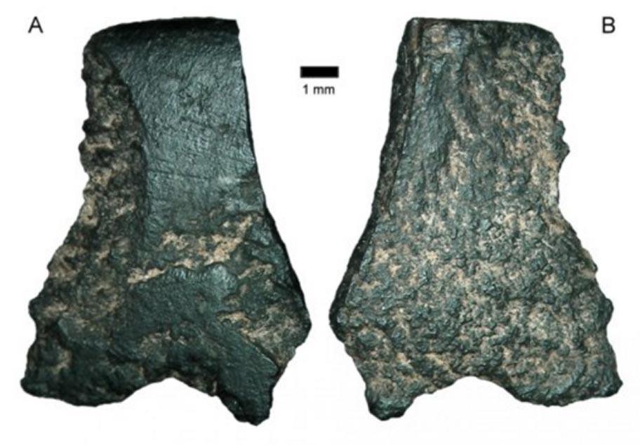 Фрагмент самого старого топора в мире под микроскопом. Фото: Australian Archaeology