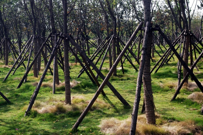 Восстановление лесов — обязанность человека. Фото: PublicDomainPictures/pixabay.com/CC0 Public Domain
