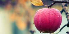Яблочный напиток при пищевых отравлениях