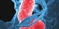 За сутки диета меняет микрофлору